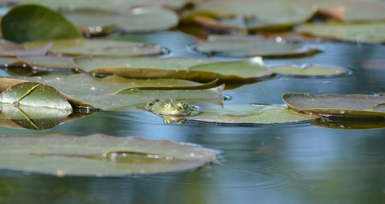 frog-1300360_960_720